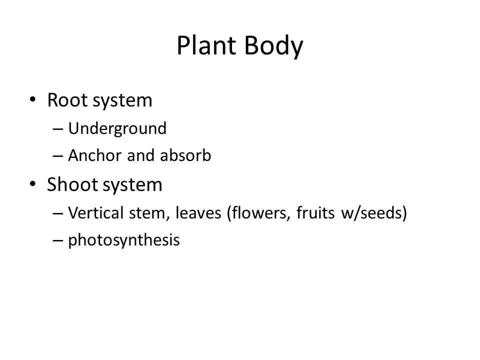 Plant Body Root system Shoot system Underground Anchor and absorb