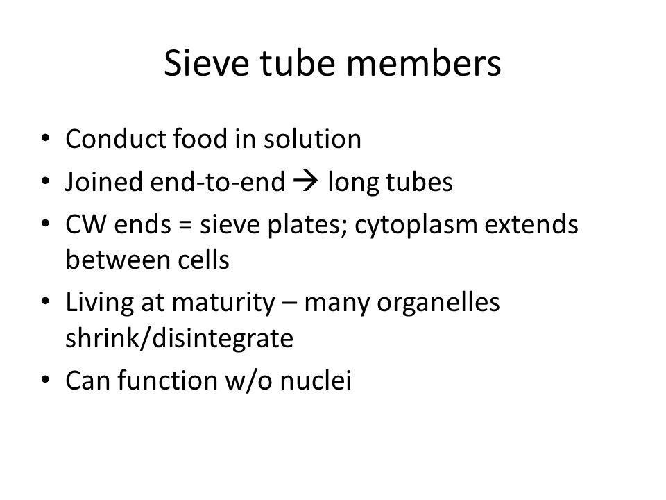 Sieve tube members Conduct food in solution