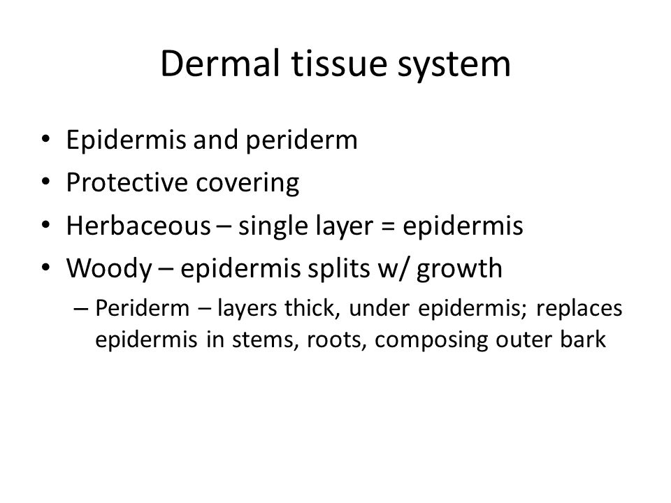 Dermal tissue system Epidermis and periderm Protective covering