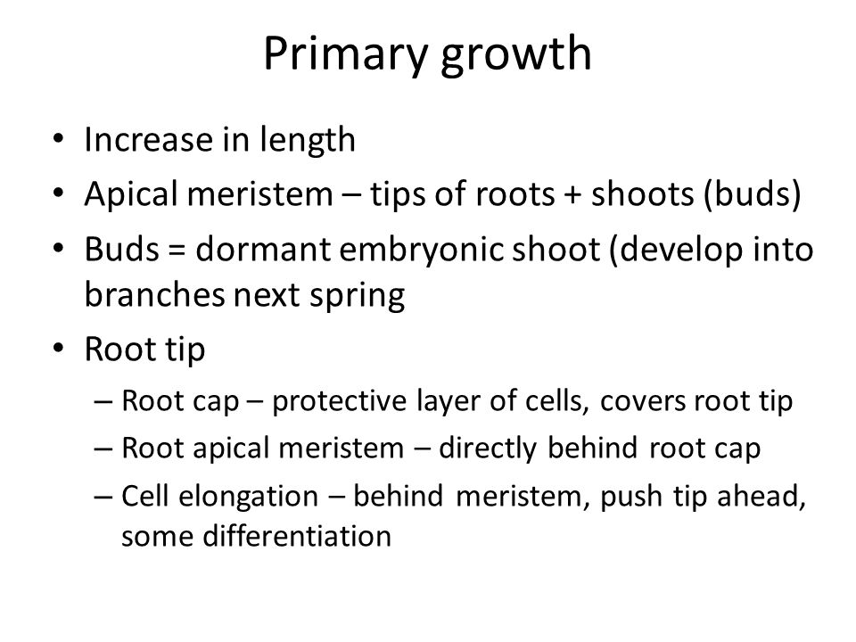 Primary growth Increase in length