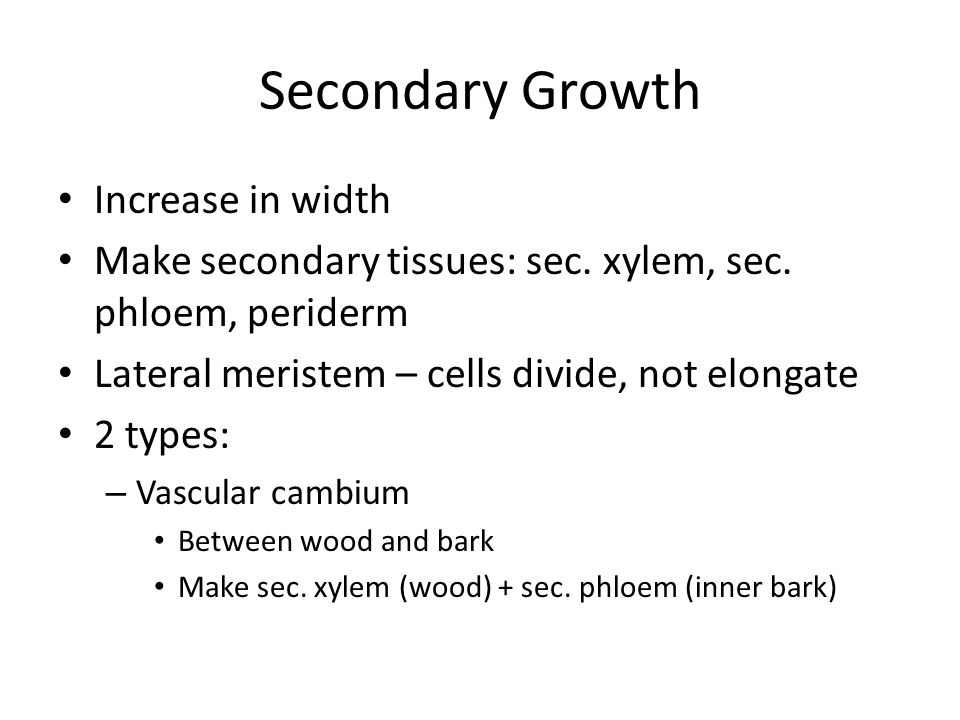 Secondary Growth Increase in width