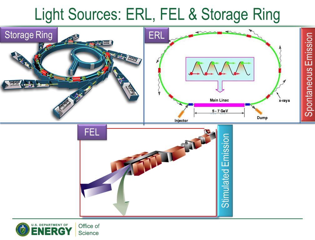 Light Sources: ERL, FEL & Storage Ring