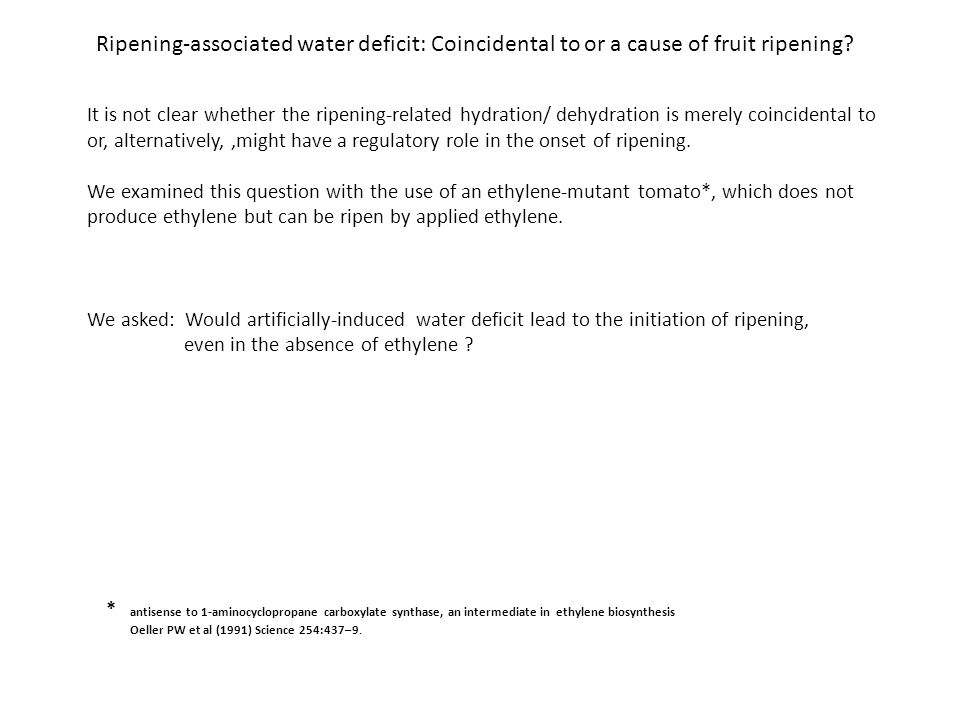 Ripening-associated water deficit: Coincidental to or a cause of fruit ripening