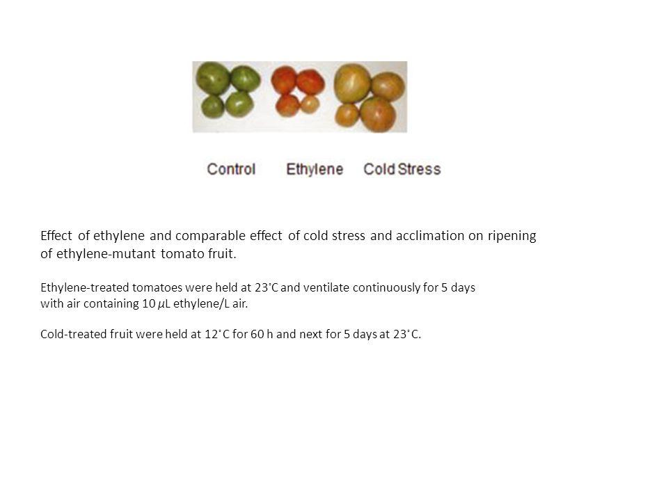of ethylene-mutant tomato fruit.