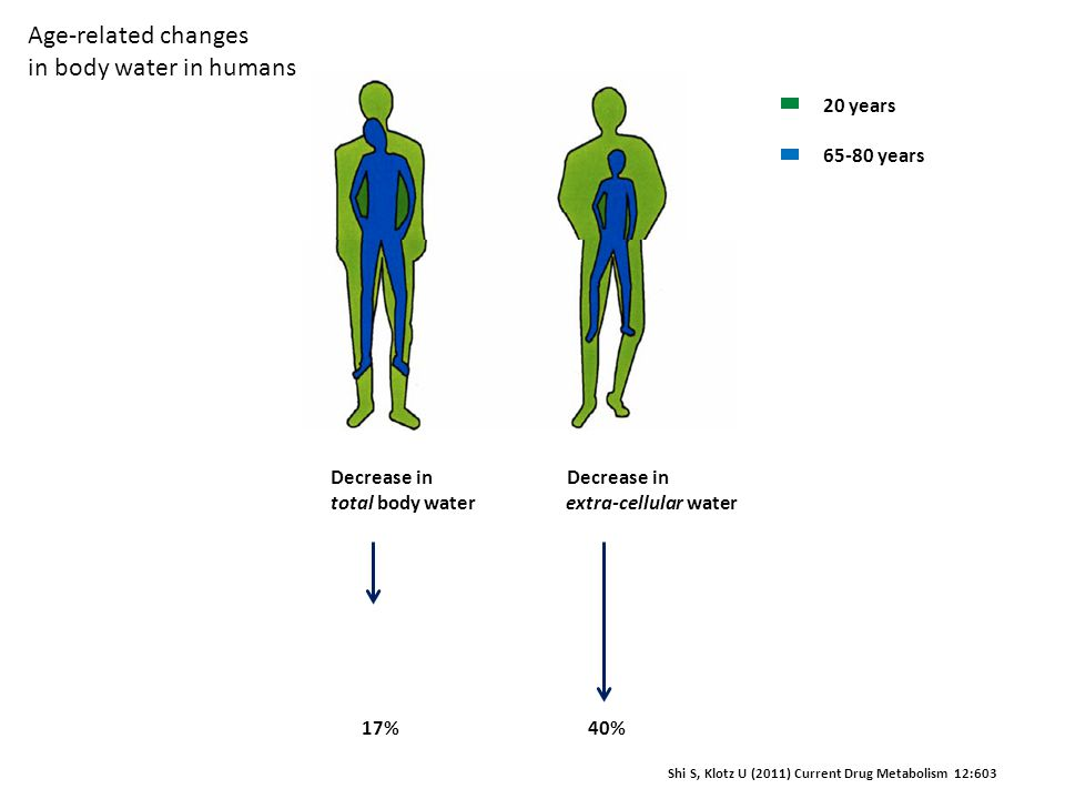 Age-related changes in body water in humans 20 years 65-80 years
