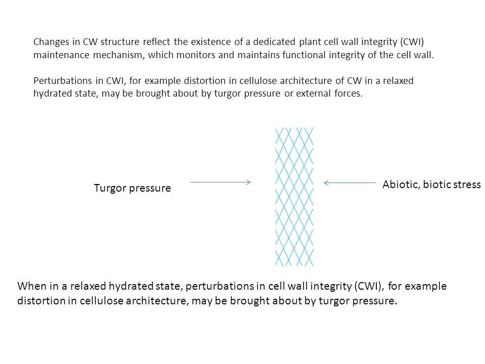 Abiotic, biotic stress Turgor pressure