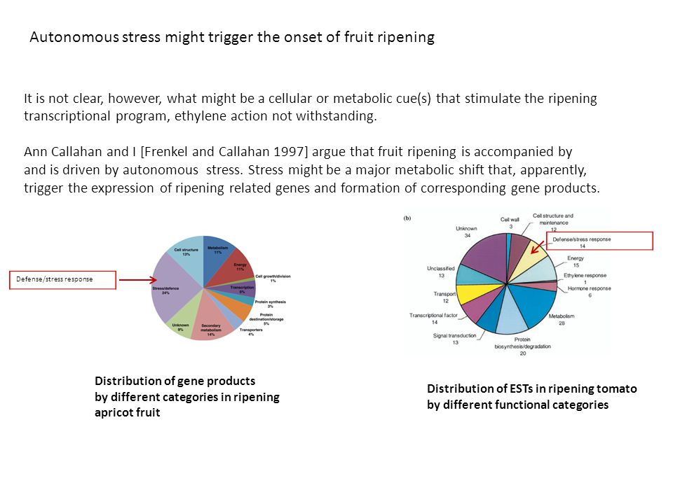 Autonomous stress might trigger the onset of fruit ripening