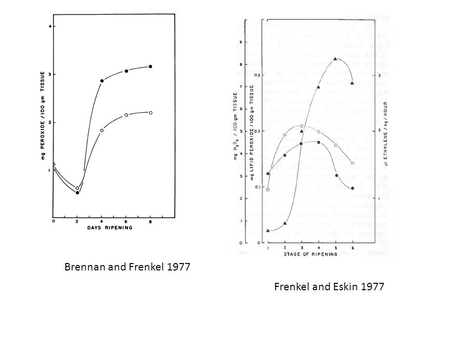 Brennan and Frenkel 1977 Frenkel and Eskin 1977
