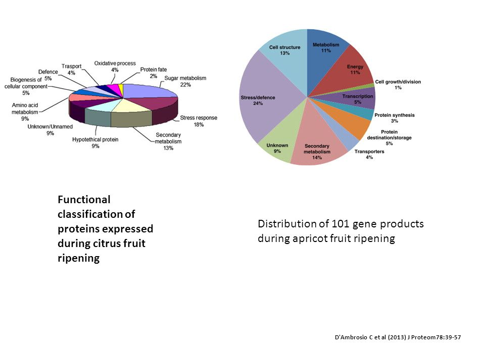 Distribution of 101 gene products during apricot fruit ripening