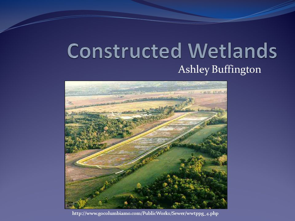 Constructed Wetlands Ashley Buffington
