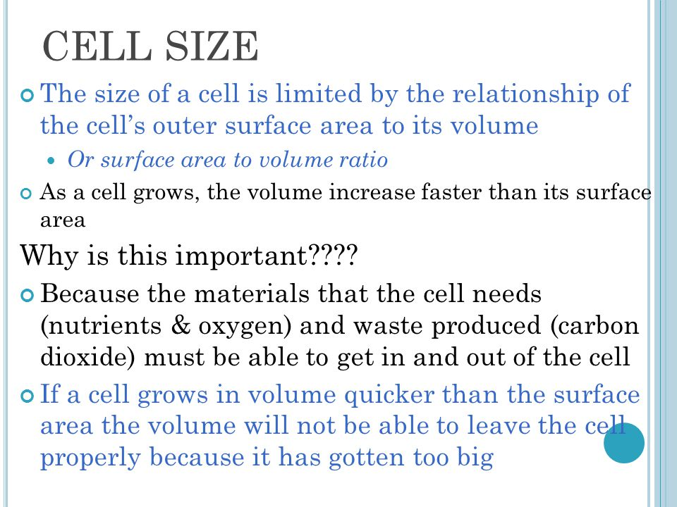 CELL SIZE Why is this important