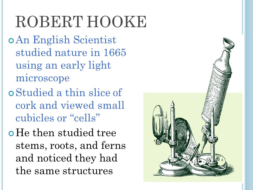 ROBERT HOOKE An English Scientist studied nature in 1665 using an early light microscope.
