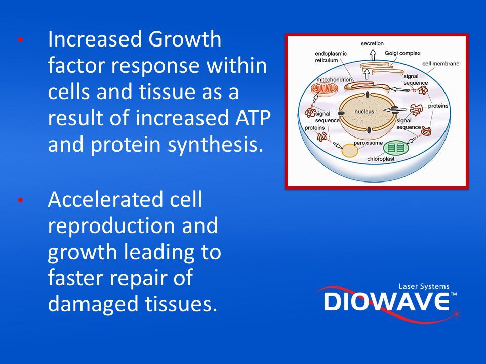 Increased Growth factor response within cells and tissue as a result of increased ATP and protein synthesis.