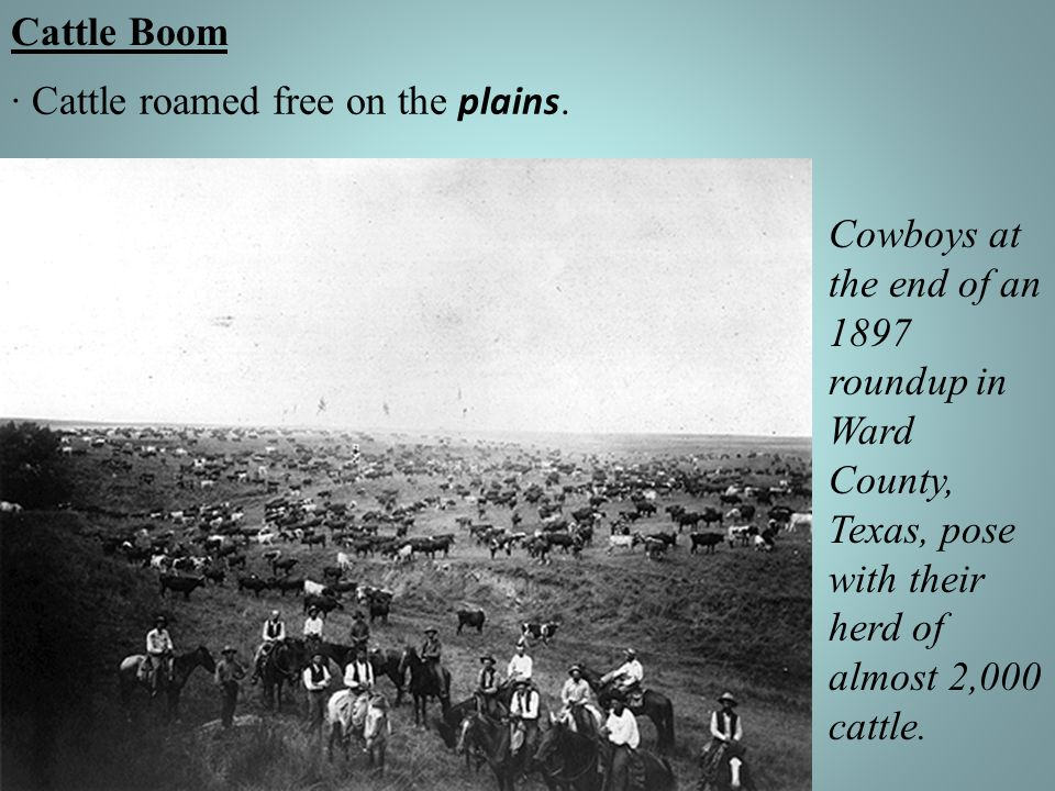 Cattle Boom · Cattle roamed free on the plains.