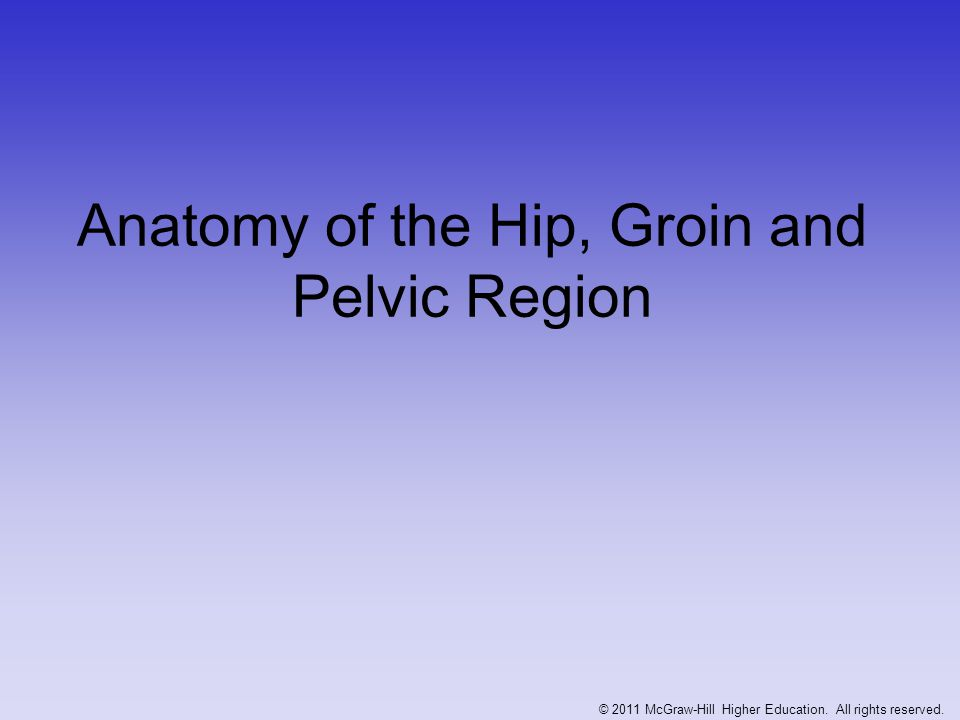 Anatomy of the Hip, Groin and Pelvic Region