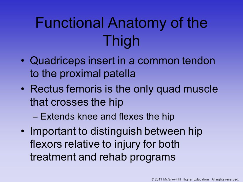 Functional Anatomy of the Thigh