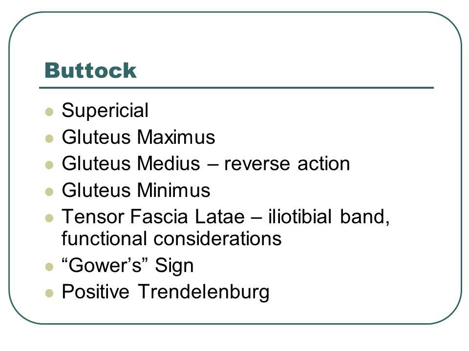 Buttock Supericial Gluteus Maximus Gluteus Medius – reverse action