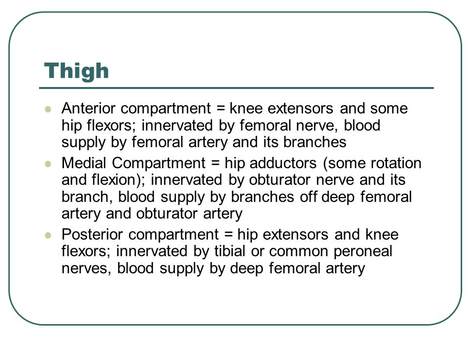 Thigh Anterior compartment = knee extensors and some hip flexors; innervated by femoral nerve, blood supply by femoral artery and its branches.