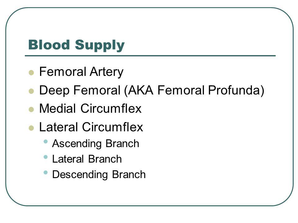 Blood Supply Femoral Artery Deep Femoral (AKA Femoral Profunda)