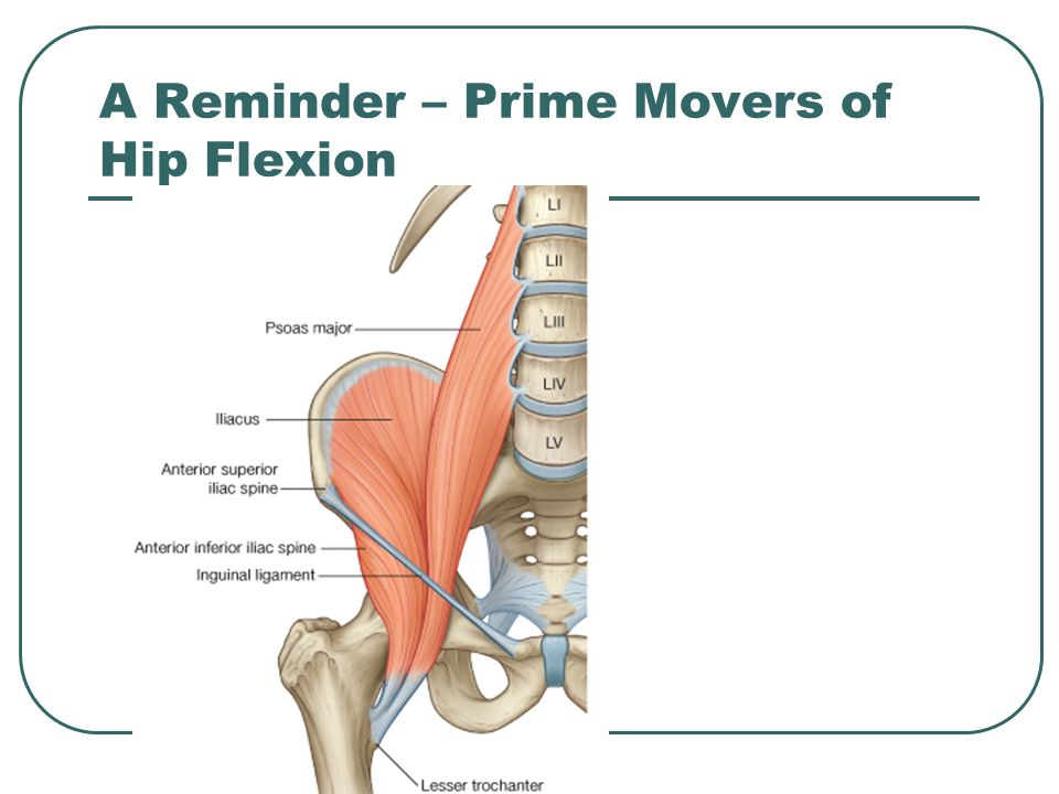 A Reminder – Prime Movers of Hip Flexion