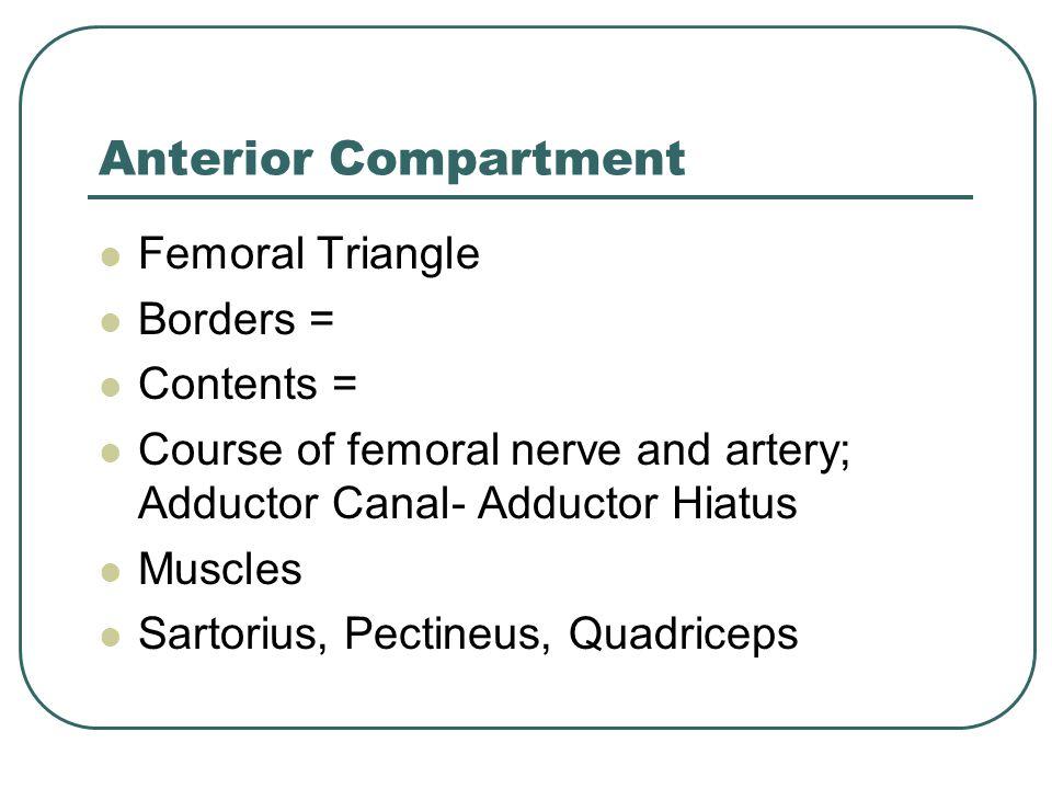 Anterior Compartment Femoral Triangle Borders = Contents =
