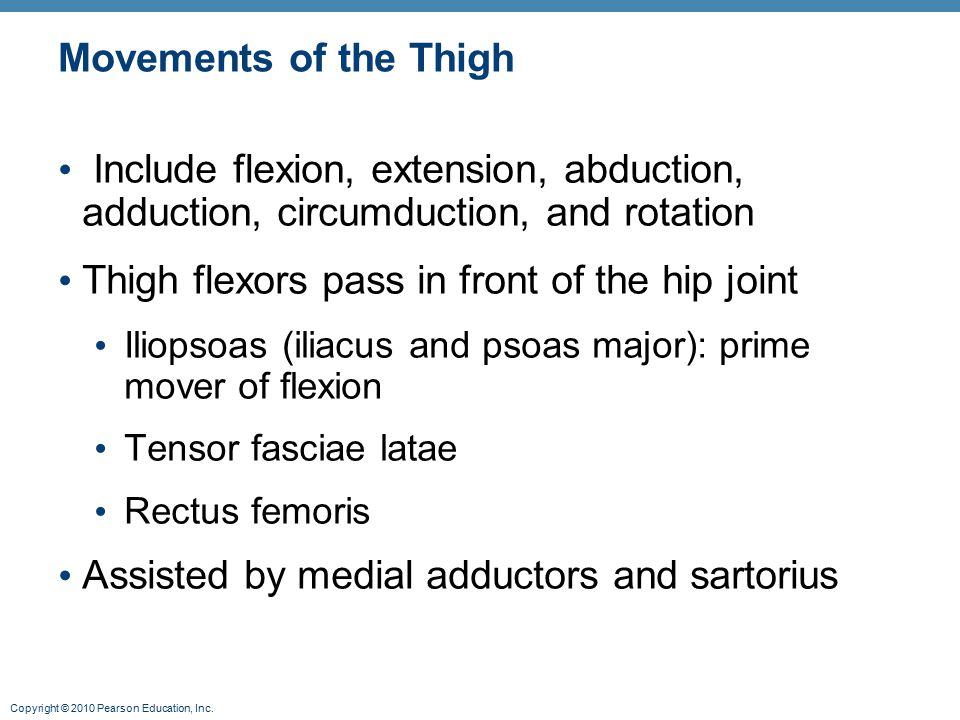 Thigh flexors pass in front of the hip joint