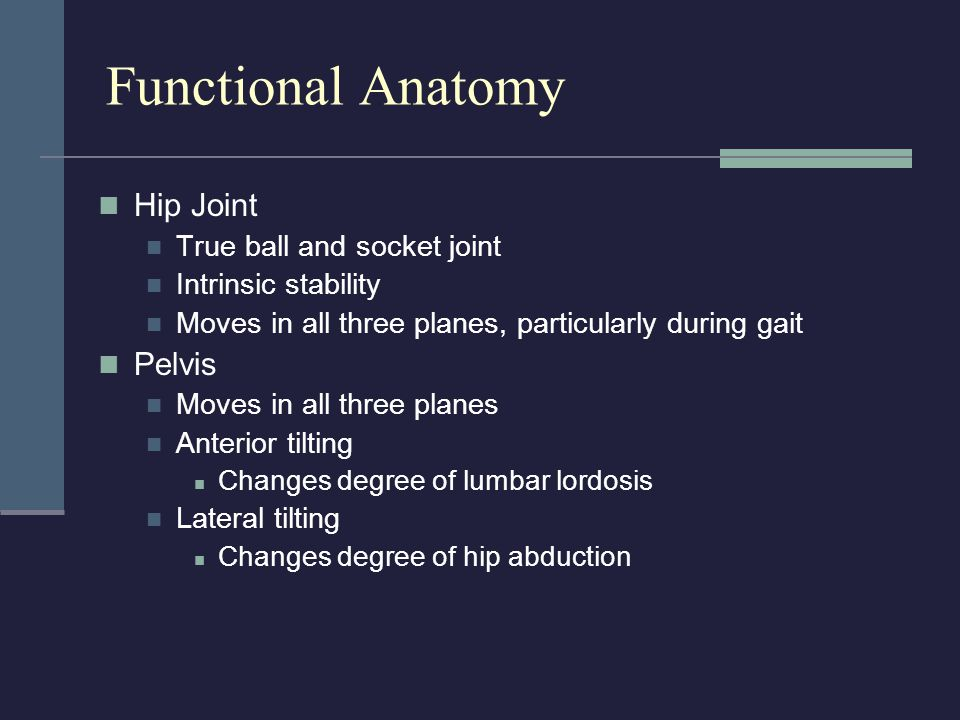 Functional Anatomy Hip Joint Pelvis True ball and socket joint