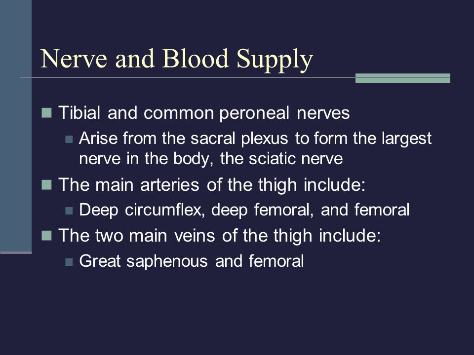 Nerve and Blood Supply Tibial and common peroneal nerves