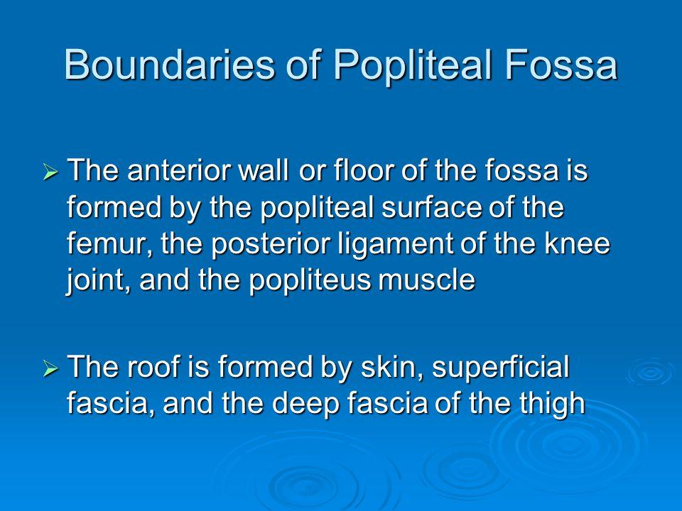 Boundaries of Popliteal Fossa