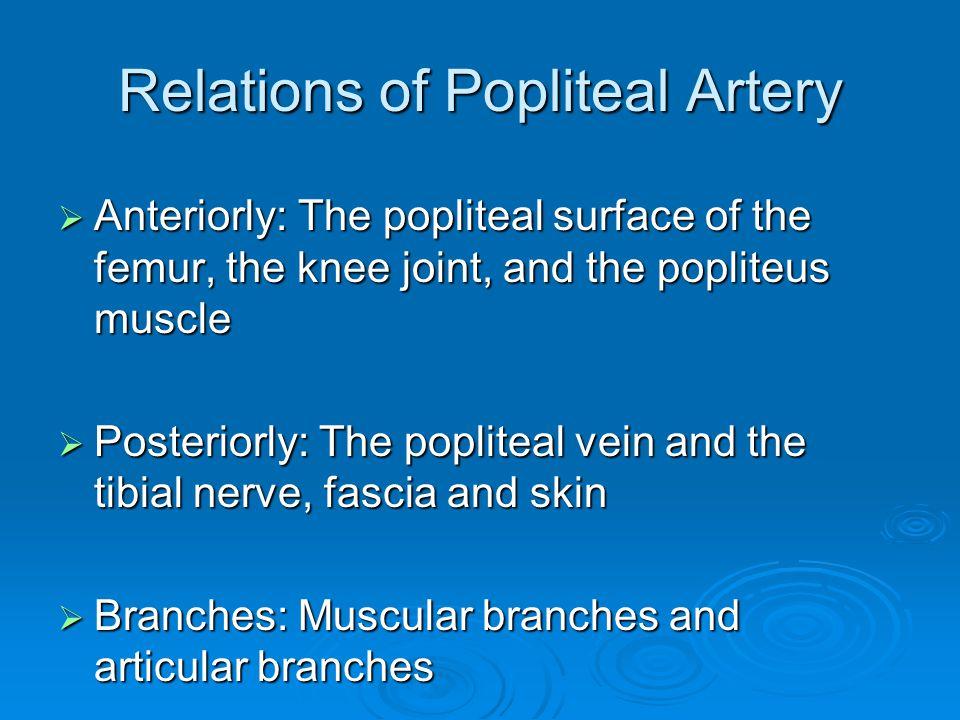 Relations of Popliteal Artery