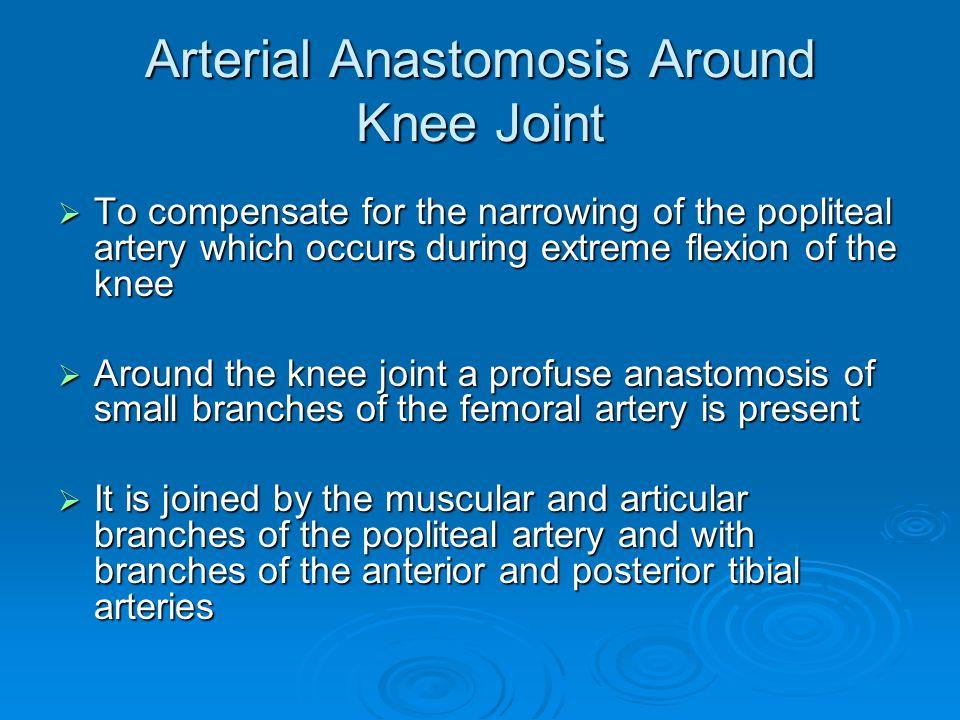Arterial Anastomosis Around Knee Joint