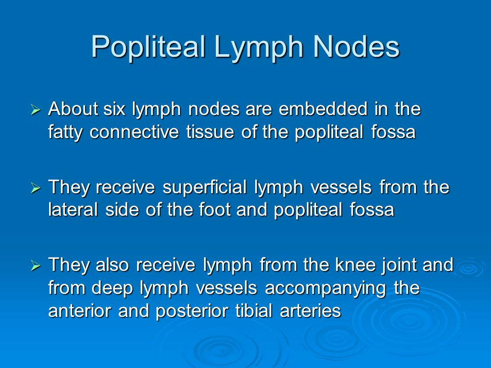 Popliteal Lymph Nodes About six lymph nodes are embedded in the fatty connective tissue of the popliteal fossa.