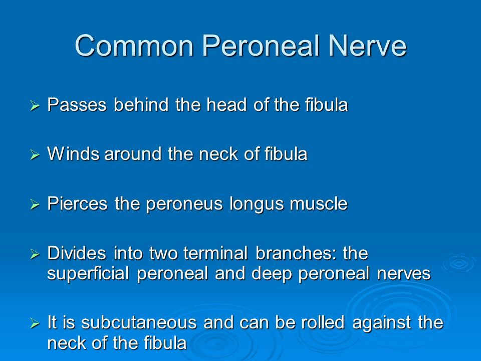 Common Peroneal Nerve Passes behind the head of the fibula