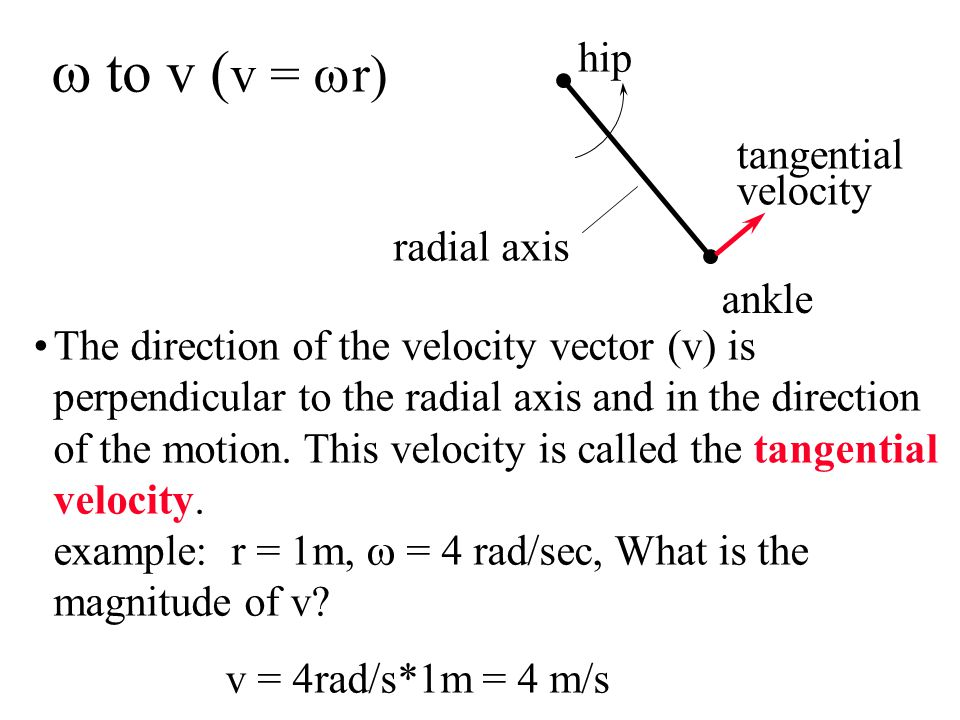 w to v (v = wr) hip tangential velocity radial axis ankle