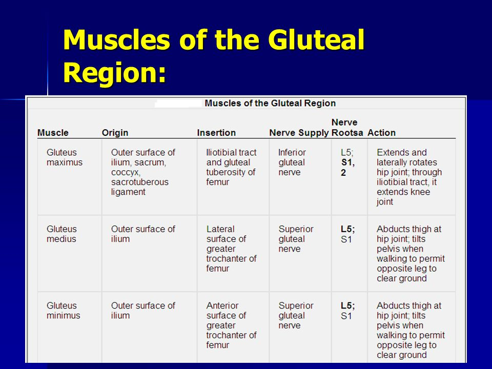 Muscles of the Gluteal Region:
