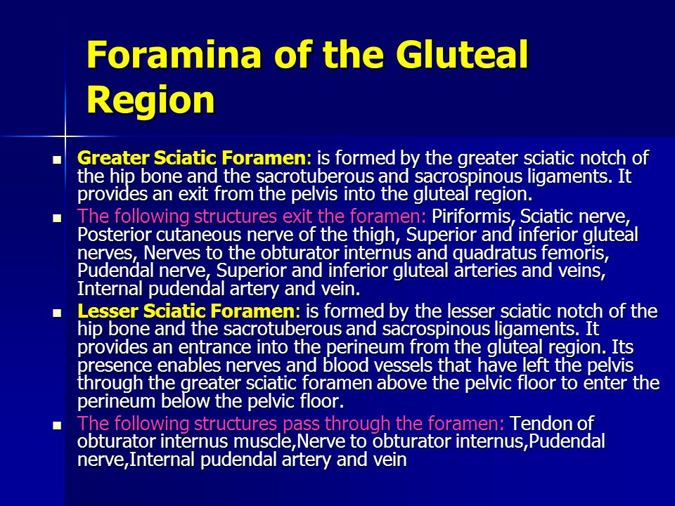 Foramina of the Gluteal Region
