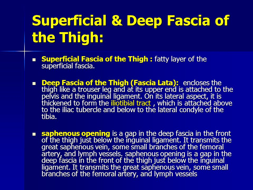 Superficial & Deep Fascia of the Thigh: