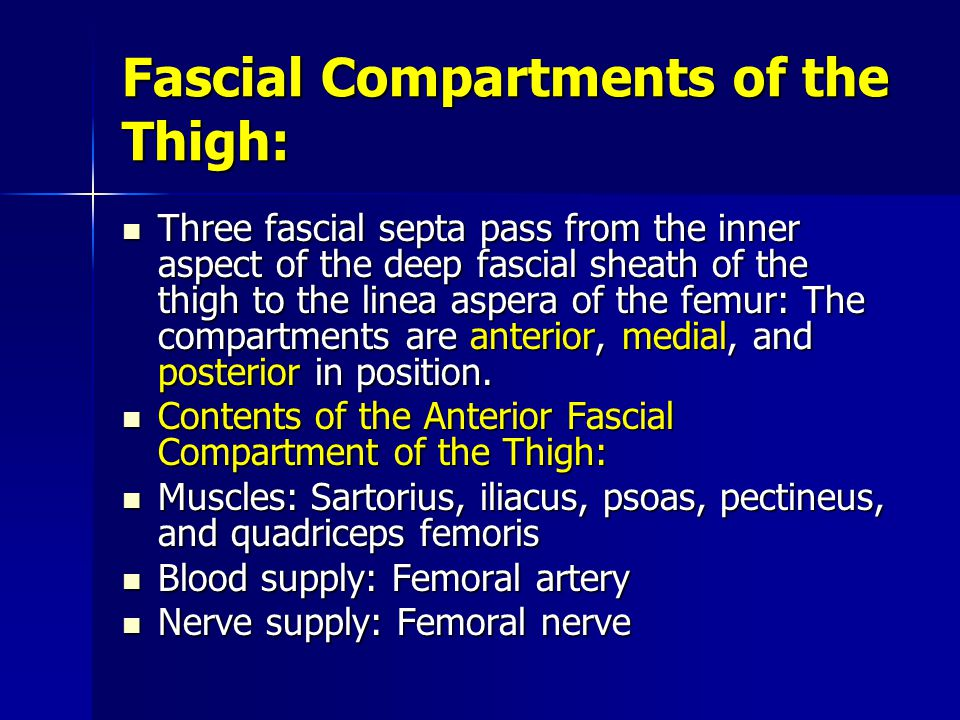 Fascial Compartments of the Thigh: