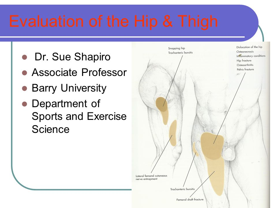 Evaluation of the Hip & Thigh