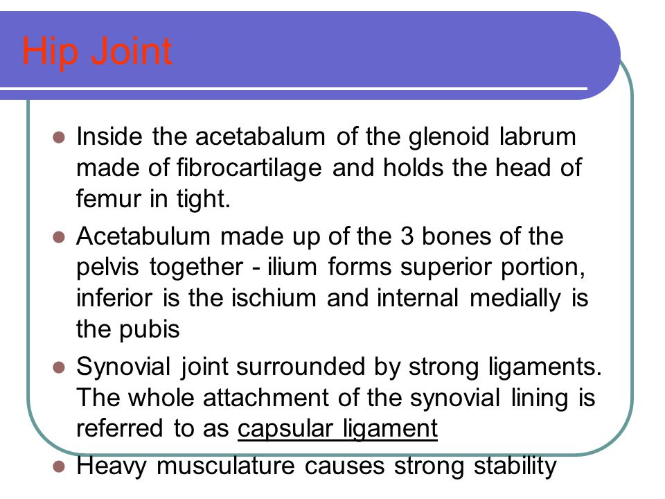 Hip Joint Inside the acetabalum of the glenoid labrum made of fibrocartilage and holds the head of femur in tight.