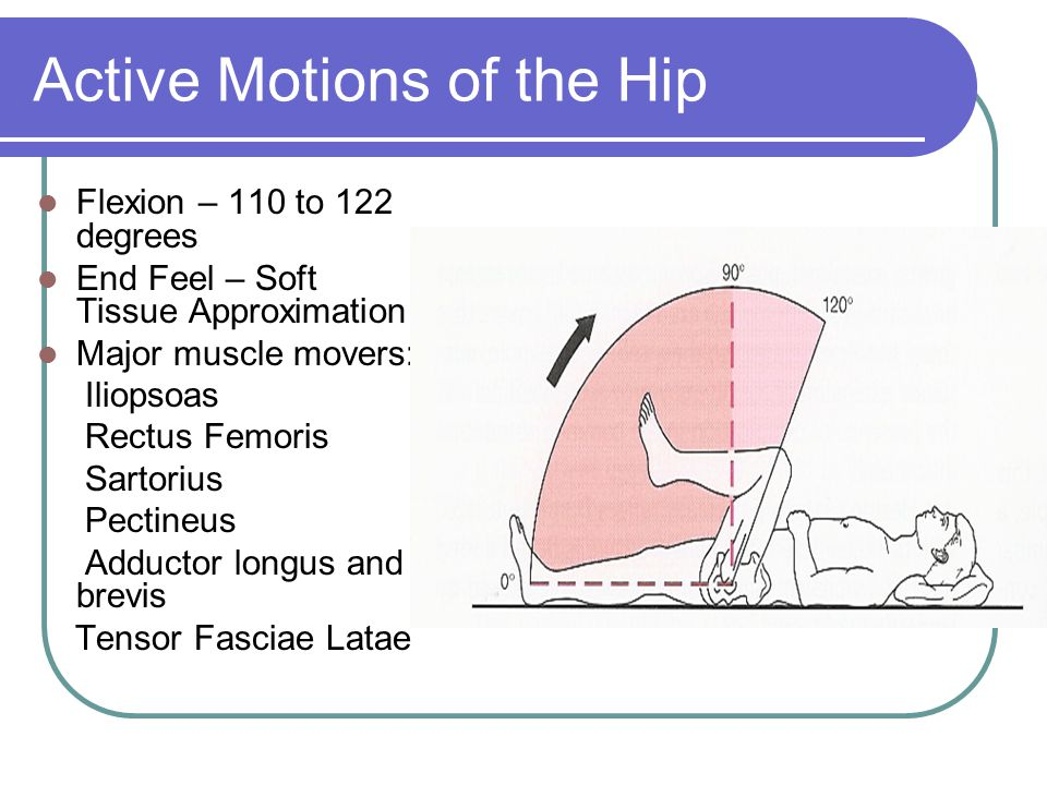Active Motions of the Hip