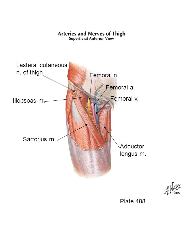Lasteral cutaneous n. of thigh Femoral n. Femoral a. Femoral v.