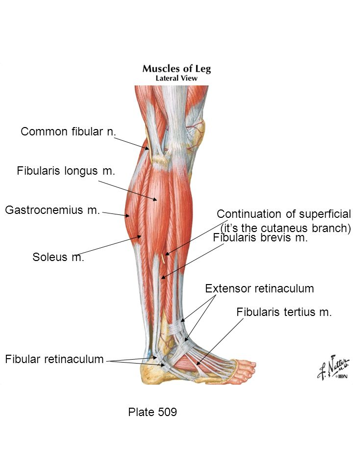 Continuation of superficial fibular nerve (it's the cutaneus branch)