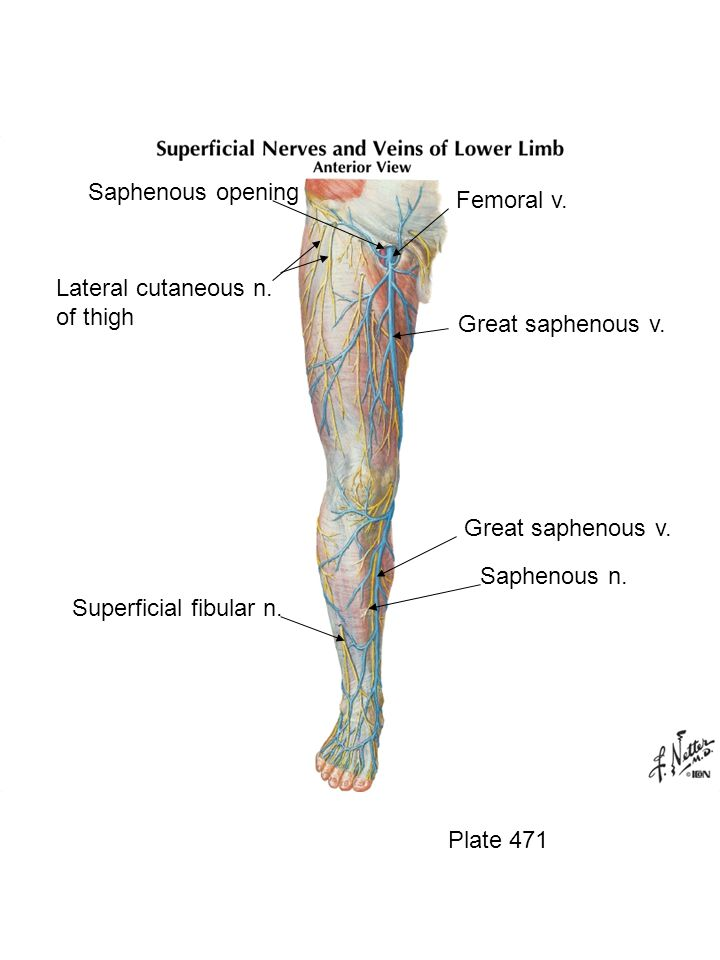 Saphenous opening Femoral v. Lateral cutaneous n. of thigh
