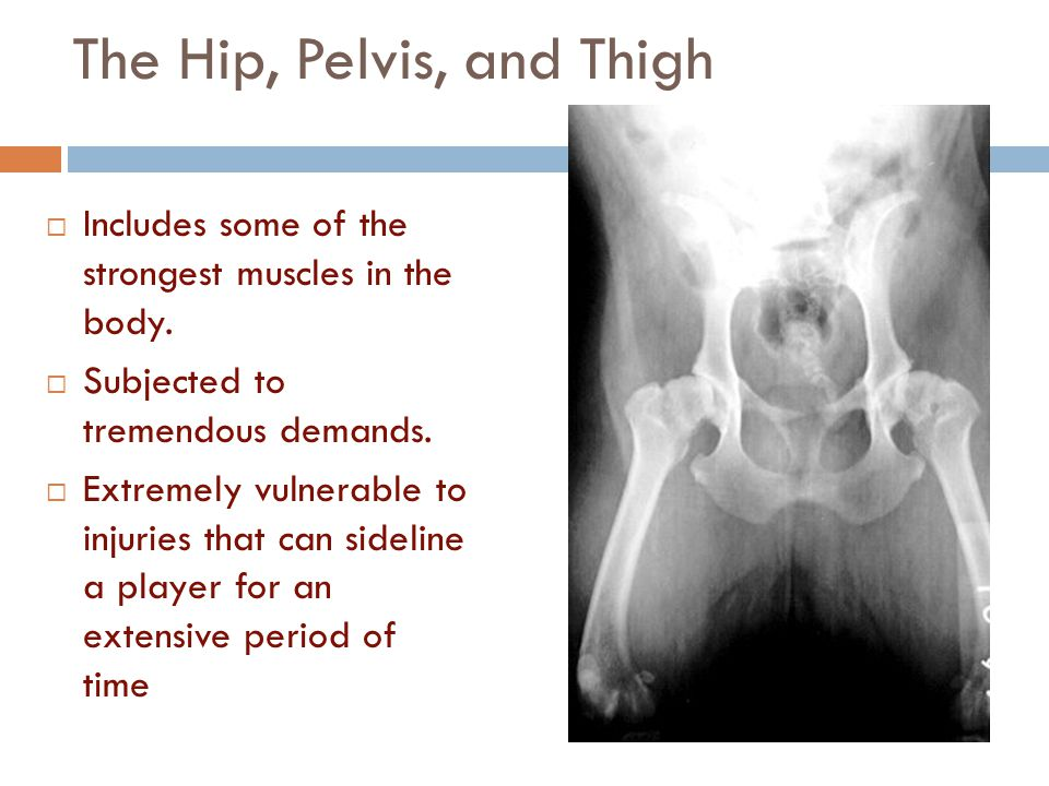 The Hip, Pelvis, and Thigh