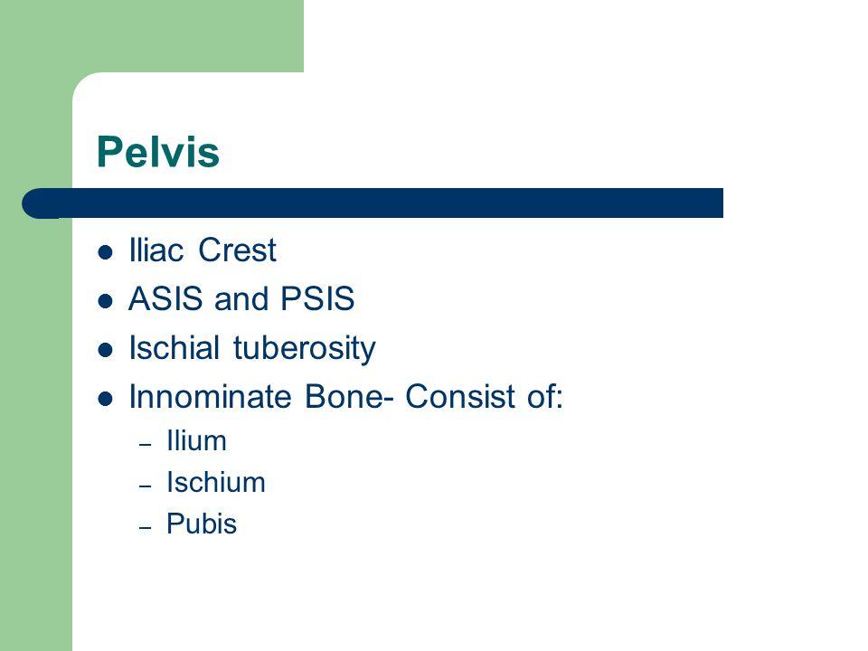 Pelvis Iliac Crest ASIS and PSIS Ischial tuberosity