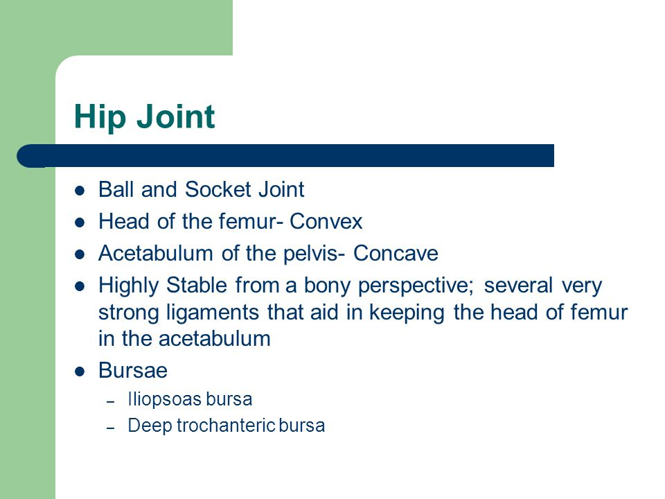 Hip Joint Ball and Socket Joint Head of the femur- Convex