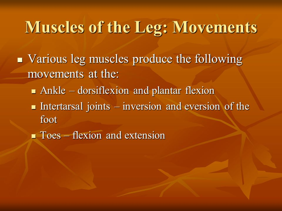 Muscles of the Leg: Movements