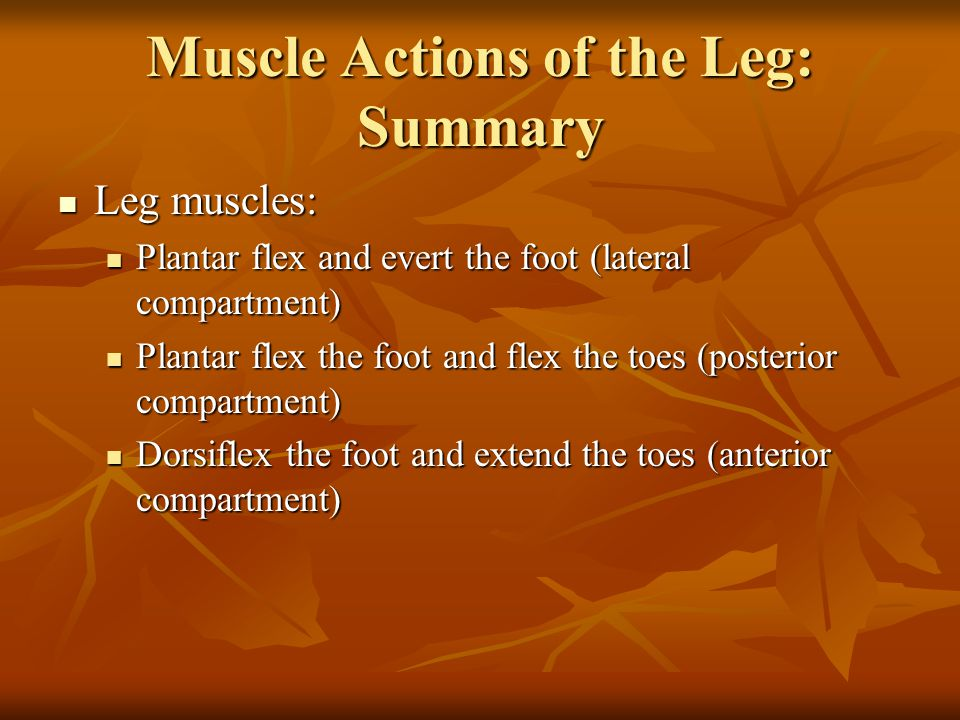 Muscle Actions of the Leg: Summary