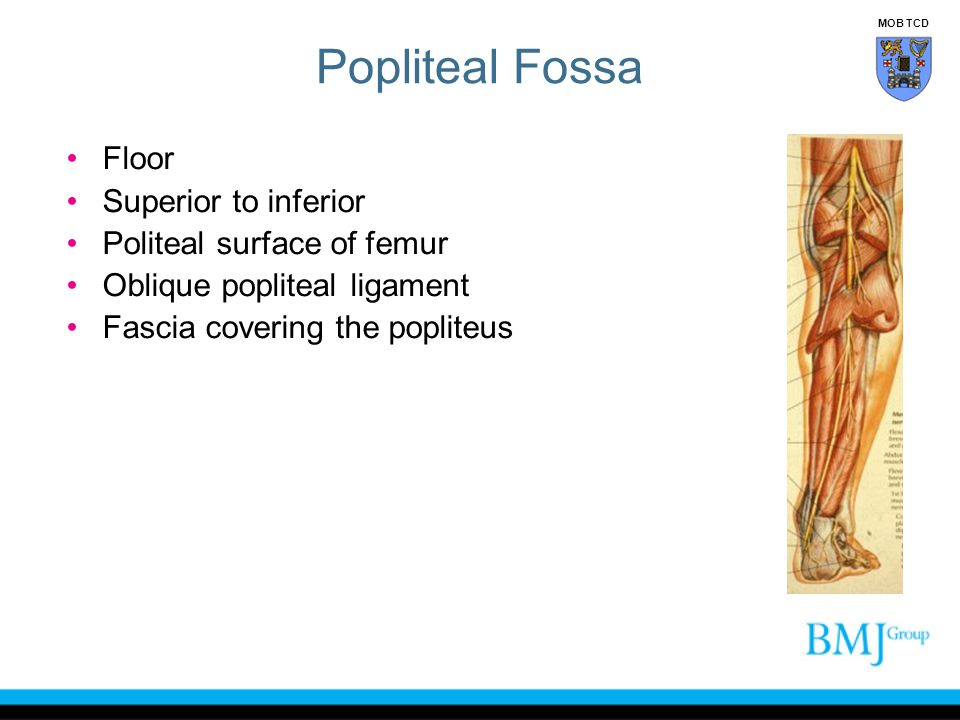 Popliteal Fossa Floor Superior to inferior Politeal surface of femur